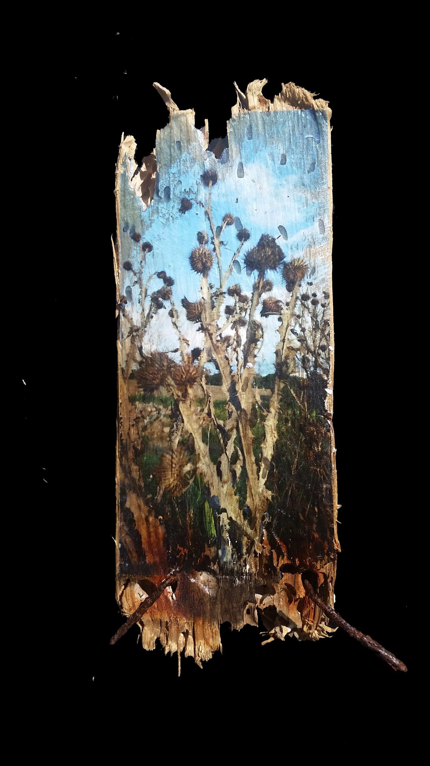 thistle on driftwood, Calla Hueppe, Claudie Hamburg, Gezeiten-Hölzer